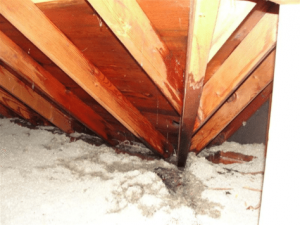 Photograph 4: Wet roof decking, rafters, and insulation near the eave.